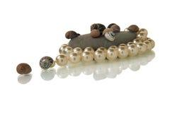 pryder med pärlor snäckskal royaltyfri bild
