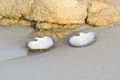 pryder med pärlor white Royaltyfri Bild