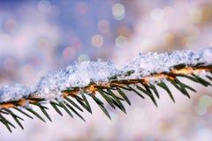 Prydlig filial för makro som täckas med snö Royaltyfri Bild