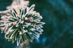 Prydlig filial för vintermakrofoto i iskristaller Royaltyfria Foton