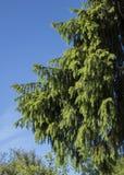 Prydlig filial mot himlen fotografering för bildbyråer