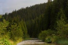 Prydlig skog i de ukrainska Carpathiansna Hållbart klart ekosystem arkivfoto