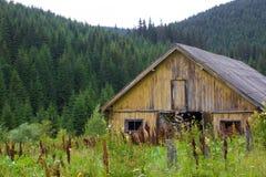 Prydlig skog i de ukrainska Carpathiansna Hållbart klart ekosystem Wood byggnad arkivfoto