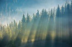 Prydlig skog i dimma på backen på soluppgång Arkivfoton