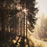 Prydlig skog i höst arkivbild