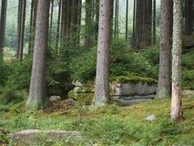 Prydlig skog i sommar Arkivfoton
