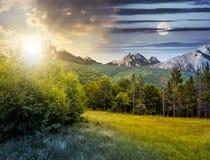 Prydlig skog på en äng i Tatras royaltyfria foton