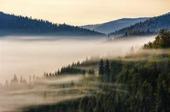 Prydlig skog på en kullesida i dimma fotografering för bildbyråer