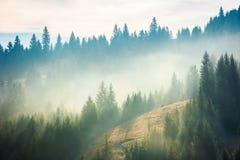 Prydlig skog på kullen i dimma arkivbild