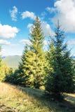 Prydlig skog på kullen i eftermiddag royaltyfria foton