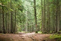 Prydlig trädskog fotografering för bildbyråer
