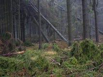Prydlig trädskog för dimmig höst med fallfrukt och och vindskyddet Royaltyfri Foto