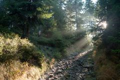Prydliga träd i misten med solstrålar Arkivfoto