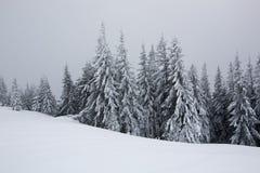 Prydliga träd som täckas med snö och frost Royaltyfri Bild