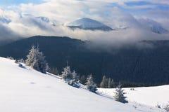 Prydliga träd som täckas med snö och frost Royaltyfria Foton