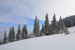 Prydliga träd som täckas med snö och frost Arkivbilder