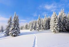 Prydliga träd står i snö sopad bergäng under en blå vinterhimmel På gräsmattan som täckas med vit snö arkivbilder