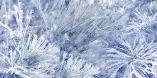 Prydliga trädfilialer för härlig snö som täckas med frost, närbild Blå julbakgrund royaltyfri bild
