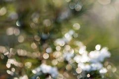 Prydligt träd i vinter med abstrakt suddighetsboke i solljus Arkivbilder