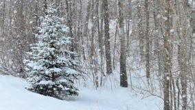Prydligt vintergrönt träd med snö på filialer i vintersnöfall Royaltyfri Fotografi
