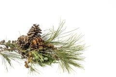 prydnadar för handbell för jul för bollaskfilial _ toys Santa Claus; Stearinljus; Gåvor; Royaltyfri Bild