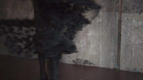 Przędzalniana balerina na scenie, kamera rusza się od jej nóg twarz zdjęcie wideo
