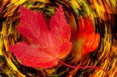 Przędzalniany liścia sen obraz royalty free