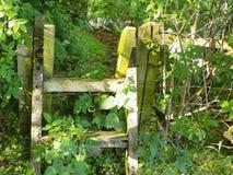 Przełaz w drewnach @ Crookham, Północny Northumberland, Anglia fotografia royalty free