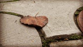 Prześcieradło asfalt Zdjęcie Royalty Free
