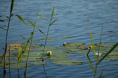 Prześcieradło jeziorny błyszczenie w słońcu z ciemnym lasowym konturem na innym brzeg zdjęcia royalty free