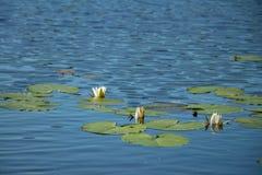 Prześcieradło jeziorny błyszczenie w słońcu z ciemnym lasowym konturem na innym brzeg obrazy royalty free
