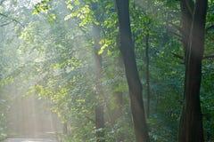 prześlijcie do lasu słońce obraz royalty free