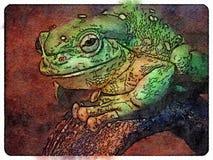 Prześwietna drzewna żaba zdjęcia stock