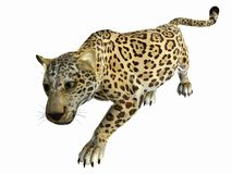 prześladowanie jaguara Obrazy Royalty Free