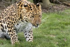 prześladowanie kota Zdjęcia Royalty Free
