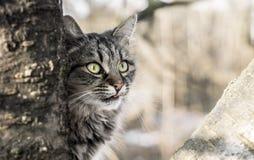 Prześladowcy kot Zdjęcie Stock