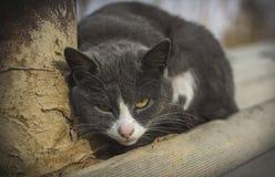 Prześladowcy kot Obrazy Royalty Free