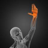 prześwietlenia ludzki obraz cyfrowy Zdjęcie Stock