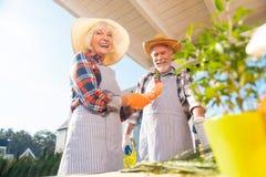 Przechodzić na emeryturę mąż i żona jest ubranym pasiastych fartuchy podczas gdy robić uprawiać ogródek fotografia royalty free