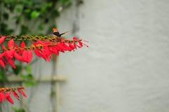 Przechylający strona motyl na żółtych kwiatach obraz stock