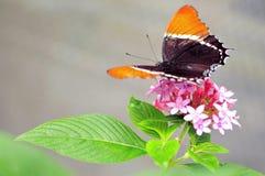 Przechylający strona motyl na kwiatach w wolierze obraz stock
