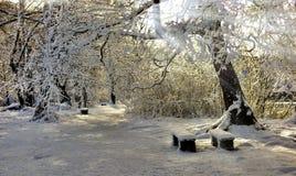 Przeciekać w cieple zimy słońce Zdjęcie Stock
