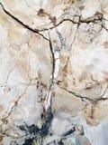Przecinająca Rżnięta sekcja Fosillized drewno obraz stock