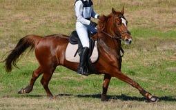 Przecinającego kraju koń w akci Zdjęcia Stock