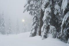 Przecinającego kraju narciarski ślad na Cyprysowej górze Zdjęcia Royalty Free