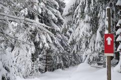 Przecinającego kraju narciarstwa ścieżka - zima krajobraz Zdjęcia Royalty Free