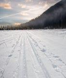 Przecinającego kraju narta Tropi Iść W odległość Obraz Royalty Free