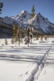 Przecinającego kraju narty śladów prowadzenie w Idaho góry zdjęcie royalty free