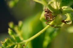 Przecinający pająk obrazy royalty free