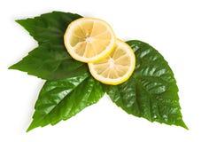 przecinający zielony liść cytryny sekci kolor żółty Obraz Stock